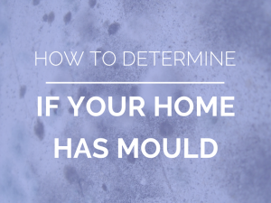 How to determine mould in the home by Cornerstone